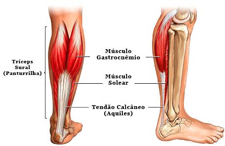 anatomia tendinite do aquiles