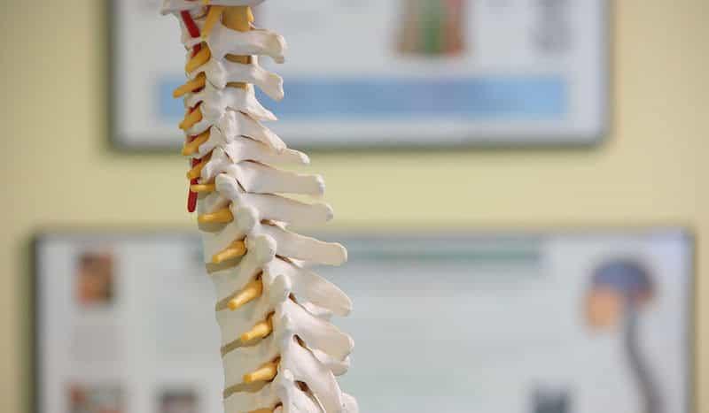 como cuidar de sua coluna vertebral