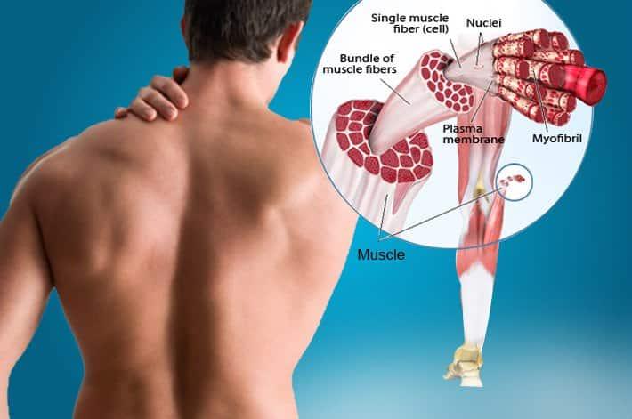 espasmos musculares lombalgia