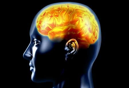 cerebro e dor