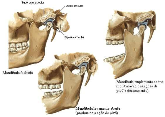 anatomia da atm