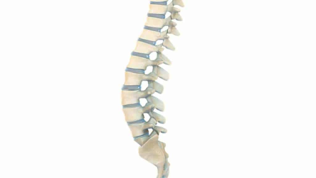 Coluna Vertebral - Fonte de Dor na Coluna - Lombalgia e Cervicalgia