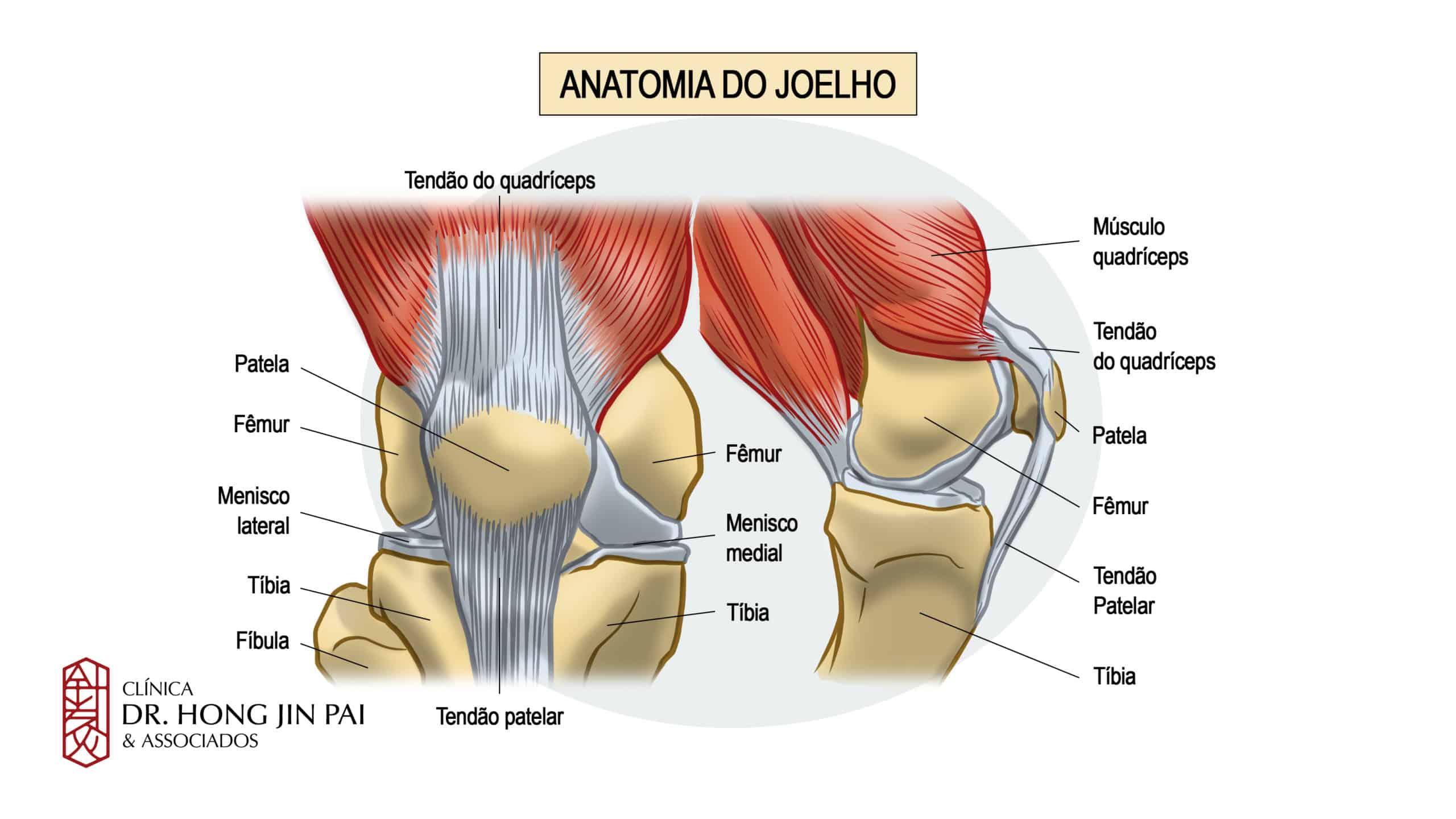 Anatomia Joelho