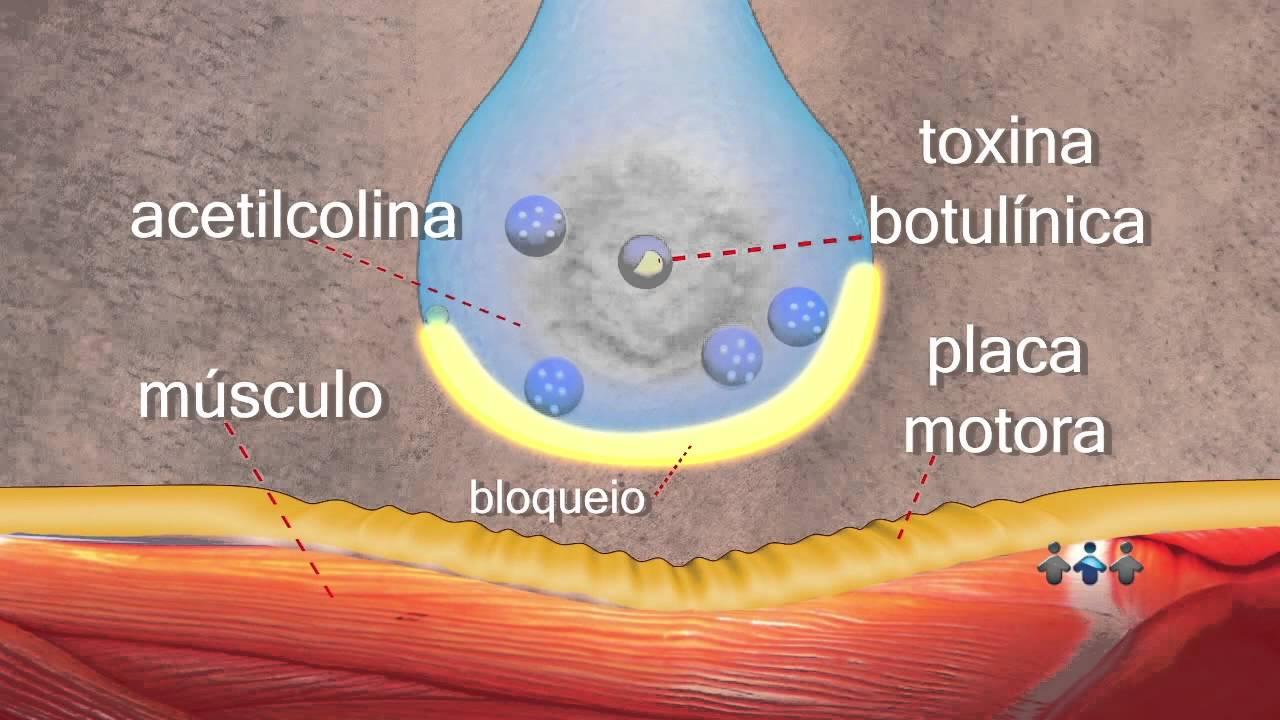 mecanismo acao toxina botulinica